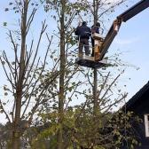 Fundamentierungsarbeiten für den Anbau des Geräteschuppens und Baumschnitt im Oktober 2019 - 12.jpg
