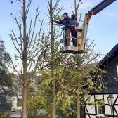 Fundamentierungsarbeiten für den Anbau des Geräteschuppens und Baumschnitt im Oktober 2019 - 13.jpg