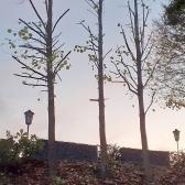 Fundamentierungsarbeiten für den Anbau des Geräteschuppens und Baumschnitt im Oktober 2019 - 14.jpg